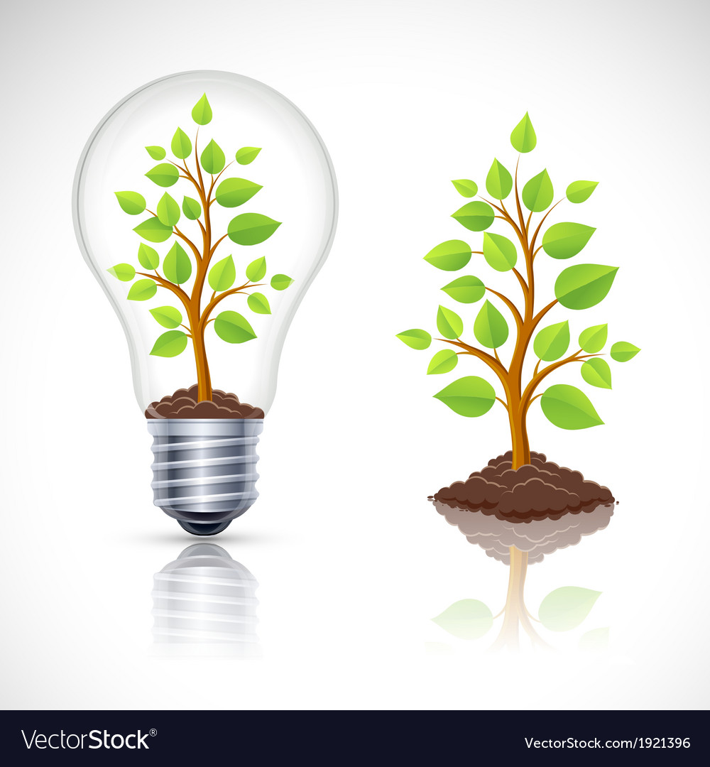 Green plant in light bulb with reflection vector