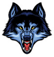 angry wolf head show his sharp teeth vector image vector image