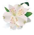 Realistic lily flower isolated vector image