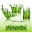 Fragments of the green grass vector image