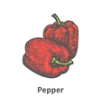 hand-drawn two ripened red Bulgarian pepper vector image