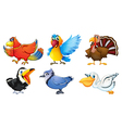 Different types of birds vector image vector image