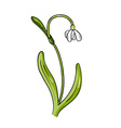 simple flower isolated on the white vector image vector image