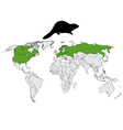 Distribution beaver vector image vector image