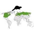 Distribution beaver vector image