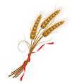 spikelets of wheat vector image