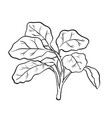 isolated watercress- hand drawn vector image