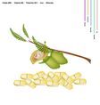 Chickpea with Vitamin B9 B6 B1 and Iron vector image