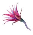 Watercolor pataya dragon flower vector image