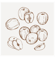Set of drawing apples Golden delicious vector image