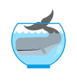 Whale in Aquarium Large sea animal is not put into vector image