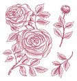 roses with leaves and buds wedding botanical vector image