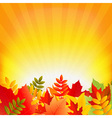 Autumn Background With Sunburst vector image