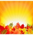 Autumn Background With Sunburst vector image vector image