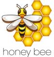 honeybee vector image vector image