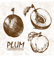 digital detailed plum hand drawn vector image
