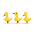 three cute cartoon ducklings characters standing vector image