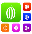 striped melon set collection vector image