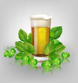 glass of beer and hops vector image