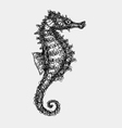 Sea horse abstract artistic lines vector image