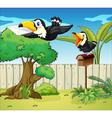 Birds at the backyard vector image