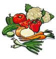 ripe fresh vegetables vector image