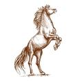 Brown horse rearing on hind hoof sketch portrait vector image