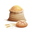 Bread And Grain 3d Concept vector image