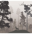 Pine forest and the wolf vector image