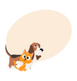 basset hound dog and red cat kitten characters vector image