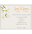 Wedding plumeria background vector image