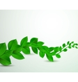 green leaves on a white background vector image