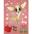 Cute Chihuahua dog with the accessories vector image