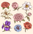 bouquet vintage hand drawn style flowers bud vector image