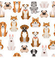 different dogs in cartoon style seamless vector image