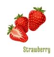 Strawberry fruits botanical icon vector image