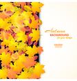 Autumn background with maple and other leaves vector image