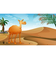 A camel in the desert vector image vector image