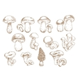 Edible mushrooms sketch drawing icons vector image