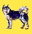 Siberian husky dog low polygon style vector image