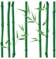 bamboo seamless vector image vector image