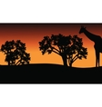 Silhouette of giraffe and trees on safari vector image