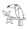 tucan draw vector image