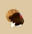 Turkey vector image