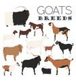 goat breeds icon set animal farming flat design vector image