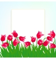Spring card background with red tulips vector image