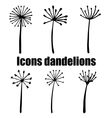 High quality original set of dandelions isolated vector image