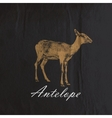 vintage of an antelope or goat on the old wr vector image