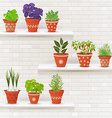 vintage collection of planted different herbs in vector image vector image
