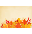 Abstract autumn background with colorful leaves vector image